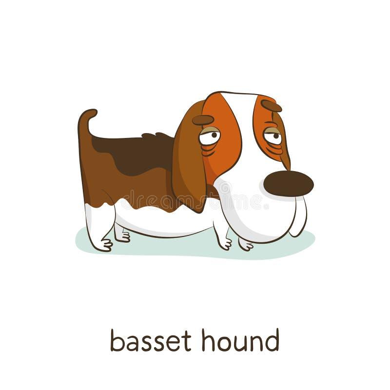 Basset hound. Dog character on white royalty free illustration