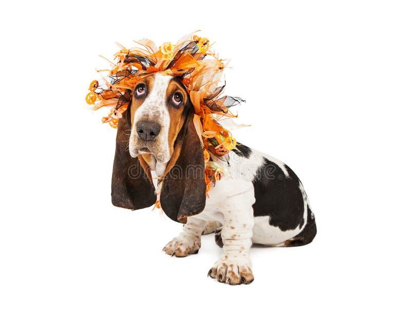 Basset Hound-Hund, der Halloween-Stirnband trägt lizenzfreies stockfoto