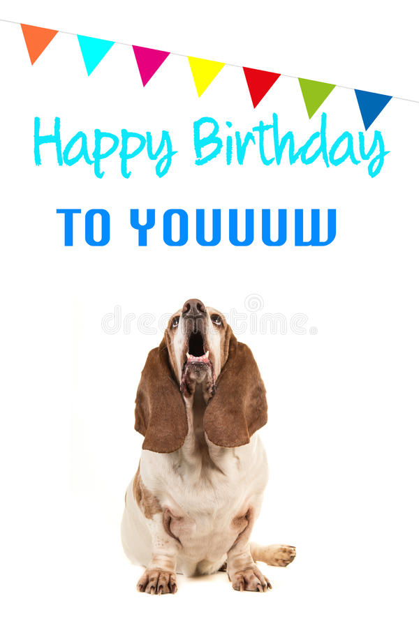 Basset hound looking up and singing text happy birthday to you on a birthday card. With party garland on a white background royalty free stock image