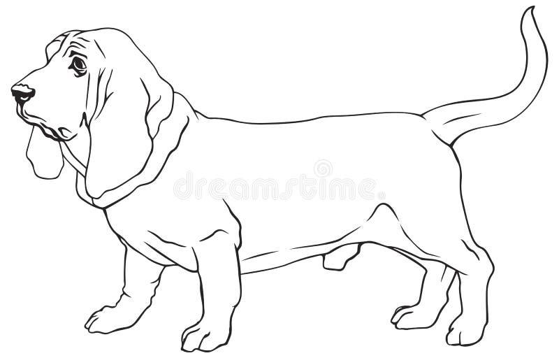 Basset Hound psa traken ilustracja wektor