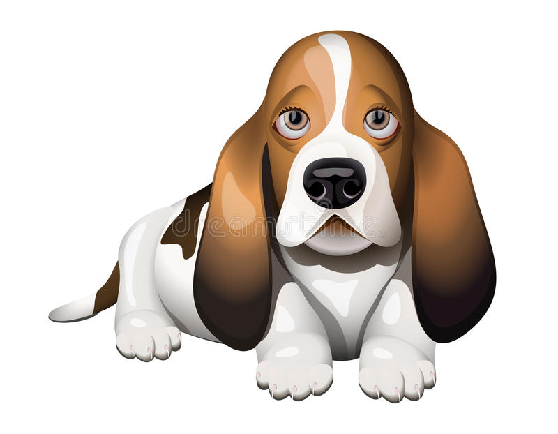 Basset Hound puppy vector illustration