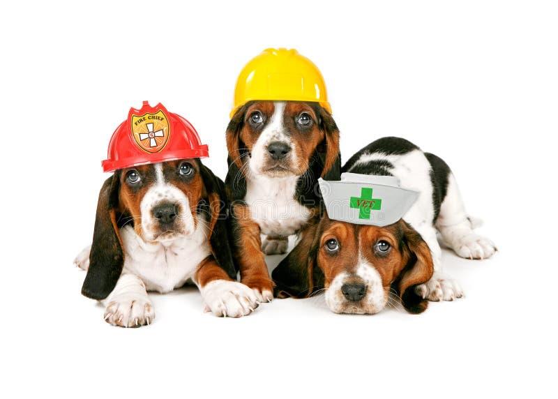 Basset Hound-Puppy die het Werkhoeden dragen royalty-vrije stock foto's