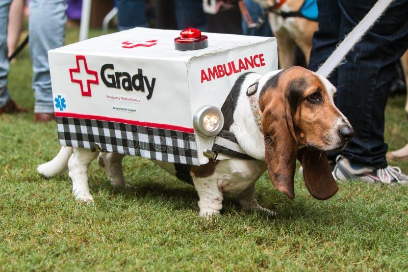 Basset Hound utilise le costume d'ambulance à l'événement d'escroc de chienchien d'Atlanta photographie stock libre de droits