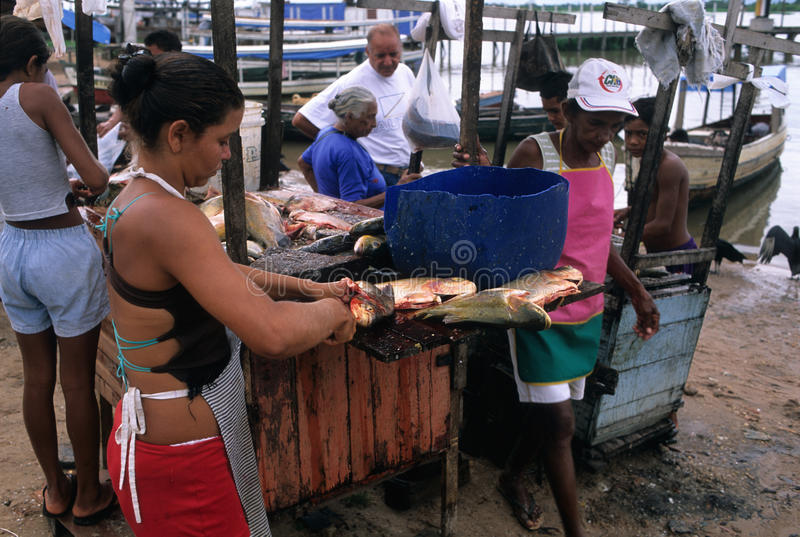 Bassin d'Amazone image stock