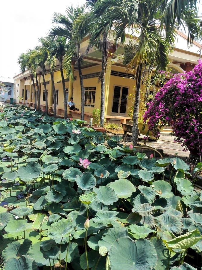 Bassin envahi avec le lotus photos stock