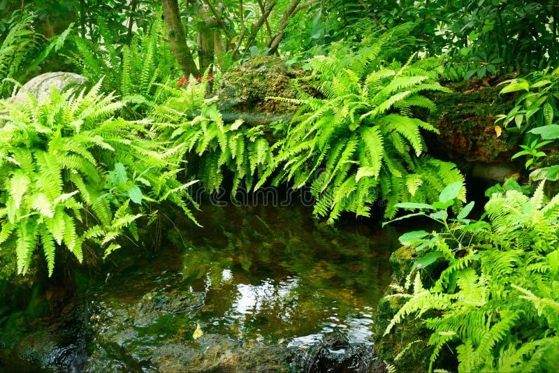 Bassins de l'eau et arbres verts photos stock