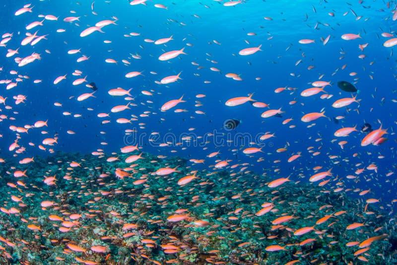 Basslet del fatato della pesca immagini stock libere da diritti