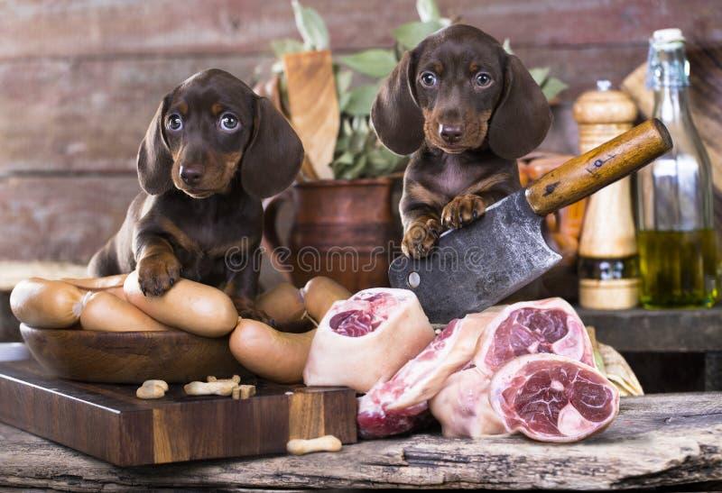 Bassotti tedeschi del cane e carne dell'alimento immagini stock