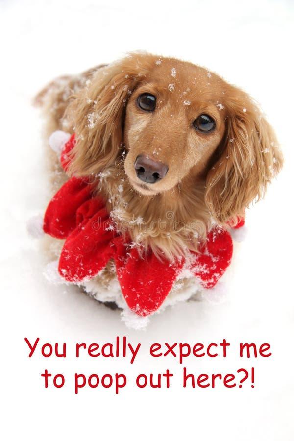 Bassotto tedesco della neve di Natale immagine stock libera da diritti