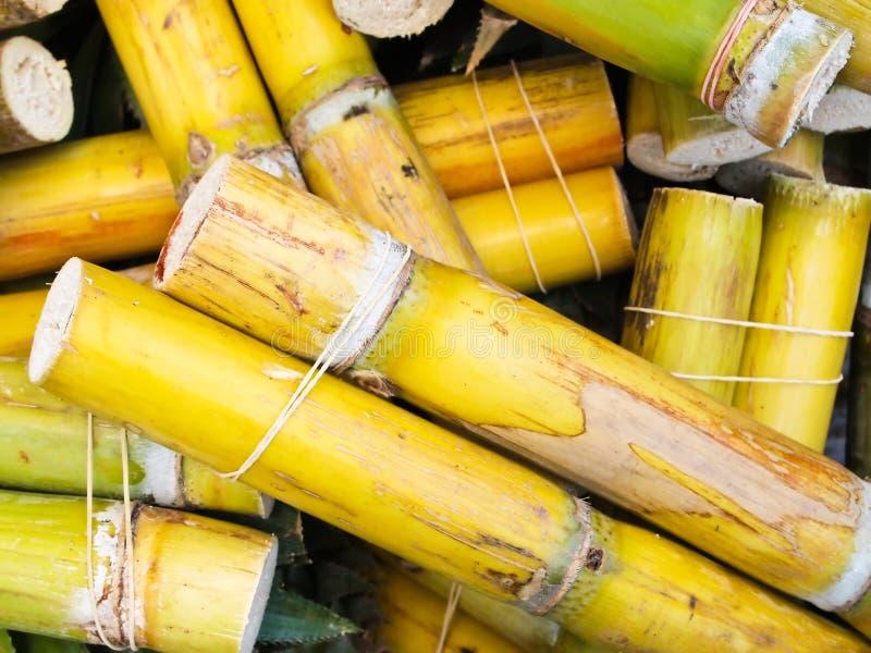 Bastão de açúcar fresco foto de stock