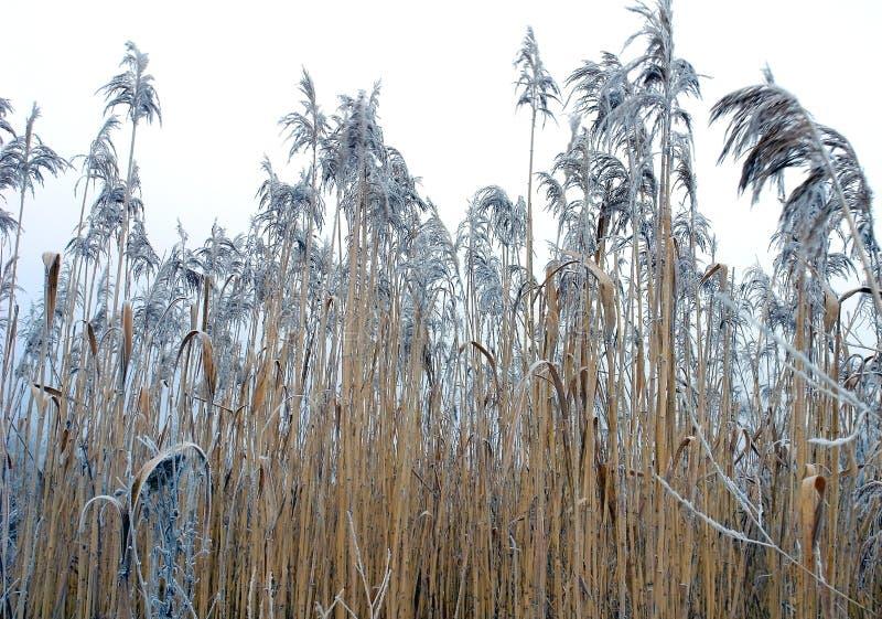 Bastón congelado fotos de archivo