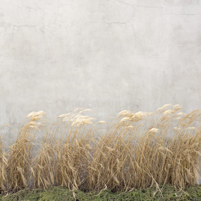 Bastón seco cerca de la pared foto de archivo