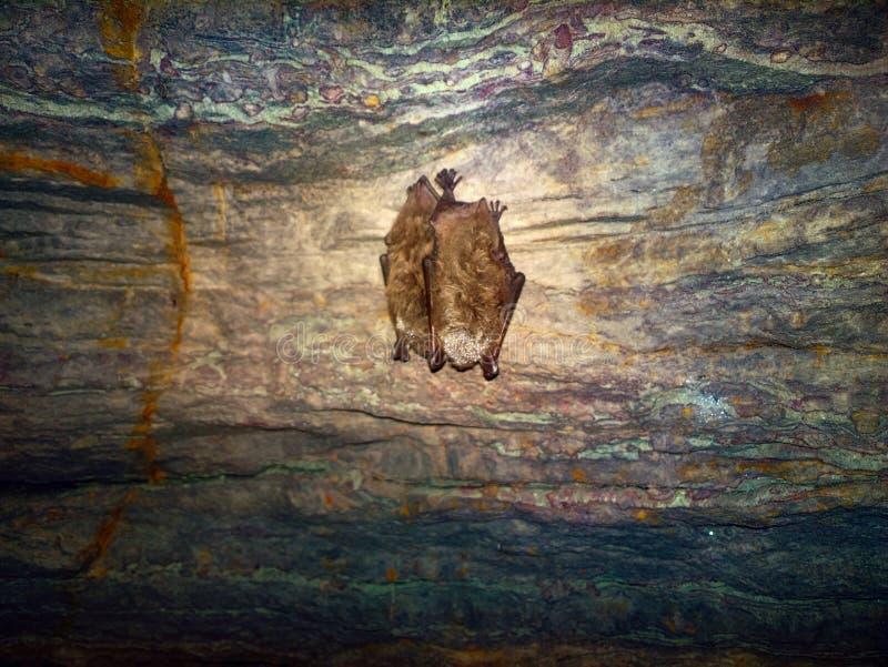 Bastões como habitantes das cavernas e dos Dungeon fotos de stock royalty free