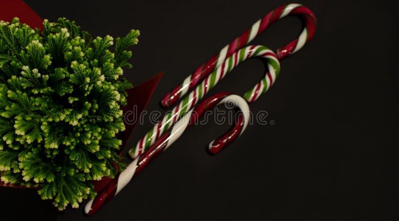 Bastões de doces do Natal e planta verde fotografia de stock