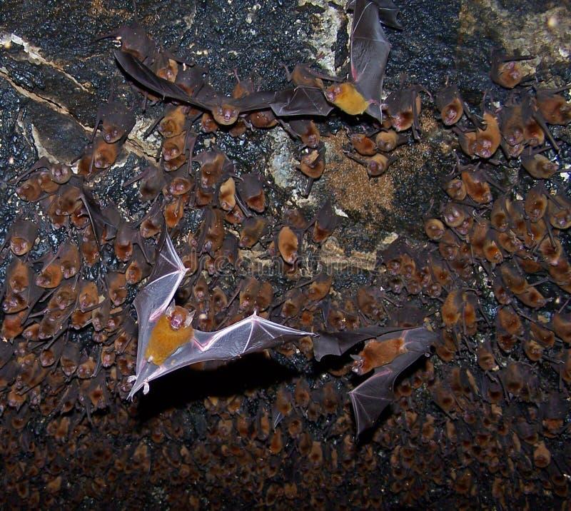Bastões em uma caverna. fotos de stock