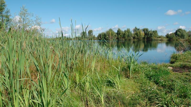 Bastões em uma costa do lago no dia de verão imagens de stock royalty free