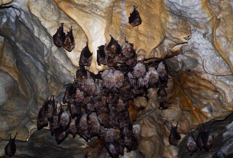 Bastões na hibernação na caverna imagens de stock royalty free