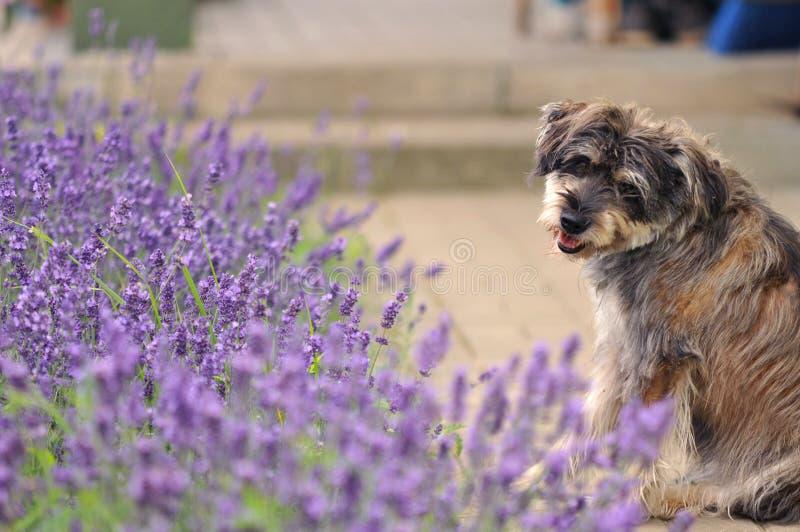 Bastaarde hond royalty-vrije stock fotografie