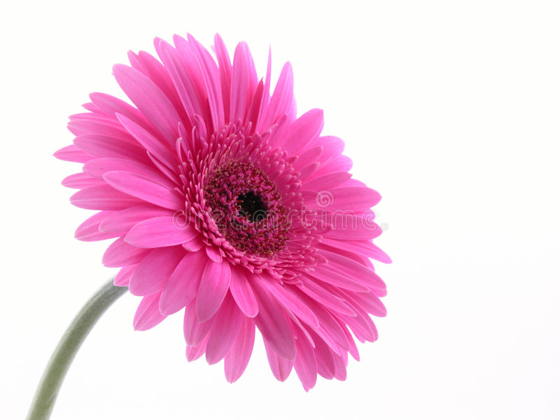 Bastante en color de rosa fotos de archivo