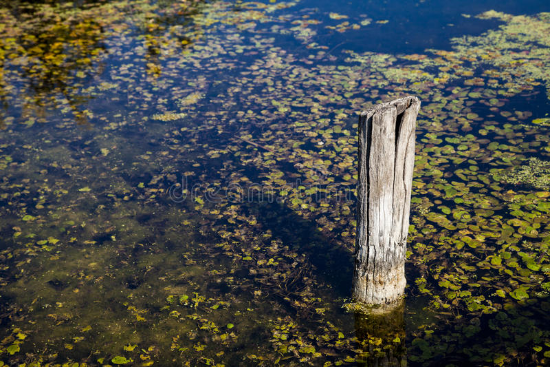 Bastone di legno in lago fotografia stock