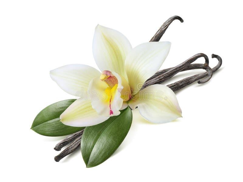 Bastoni della vaniglia con le foglie isolate su bianco immagini stock libere da diritti