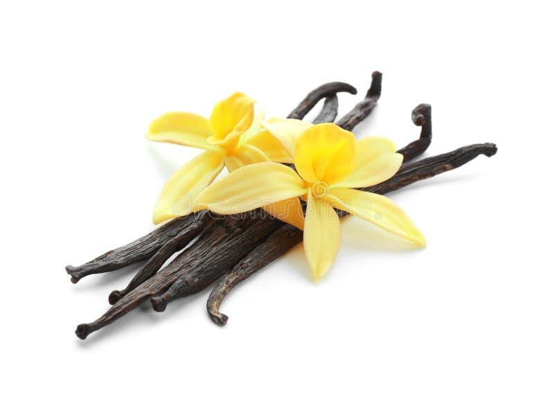 Bastoni e fiori aromatici della vaniglia su bianco immagine stock libera da diritti