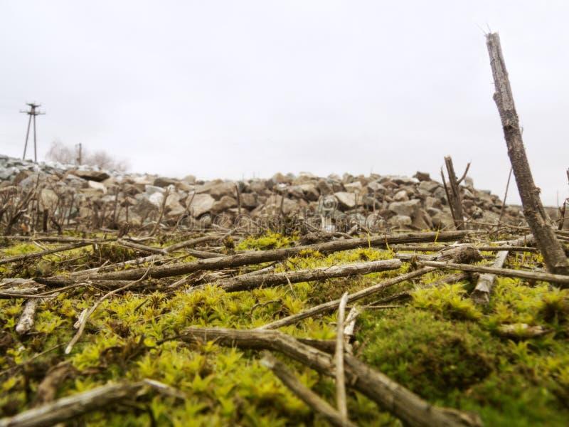 Bastoni in mezzo delle macerie di pietra fotografia stock libera da diritti