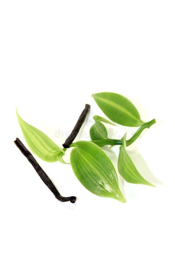 Bastoni scuri della vaniglia con le foglie verdi della vaniglia immagini stock libere da diritti