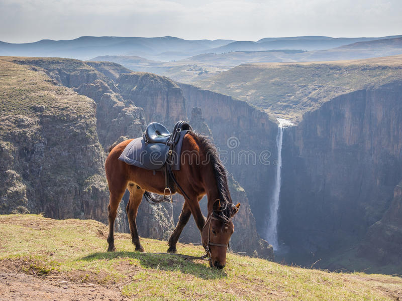 Basuto pony in front of Maletsunyane Falls and large canyon in mountainous highlands, Semonkong, Lesotho, Africa. royalty free stock photography