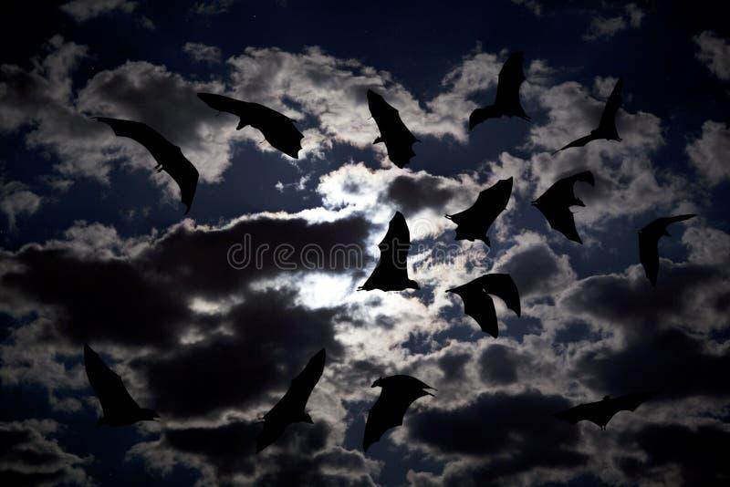 Download Bat stock image. Image of drakula, midnight, halloween - 15719459