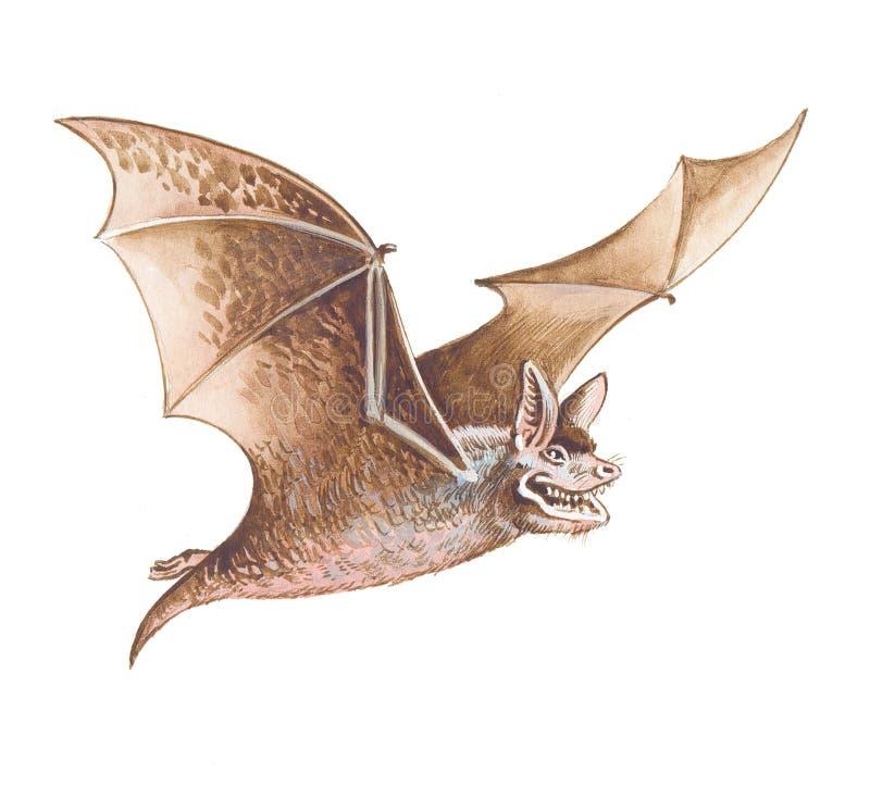 Download Bat stock illustration. Illustration of humor, drawing - 16488022