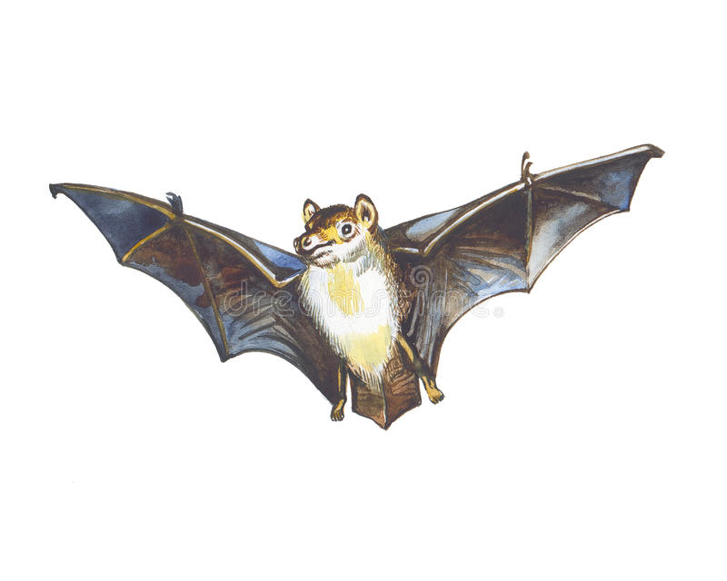 Bat  Photo stock