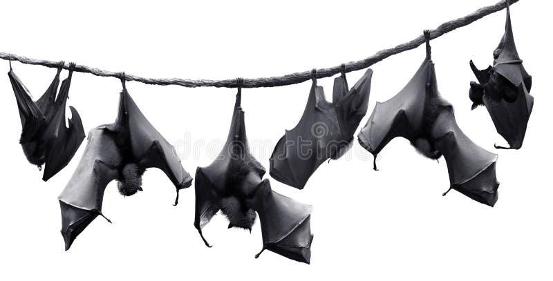 'bat'