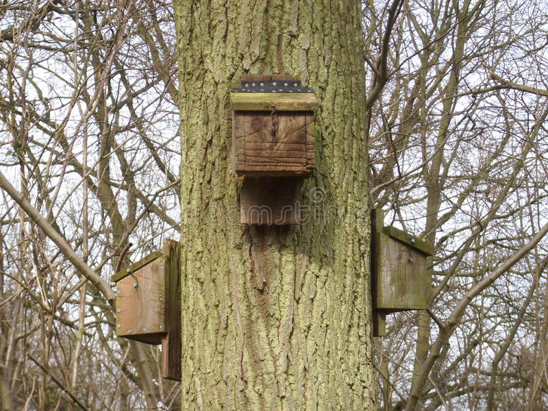 Three bat boxes on tree. Three bat boxes attached to a tree trunk. Shows how they should be spaced around the tree. These have hinged lids with hooks to close royalty free stock photos