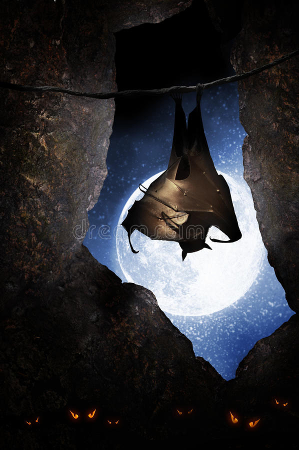 Bat in cave royalty free stock photography