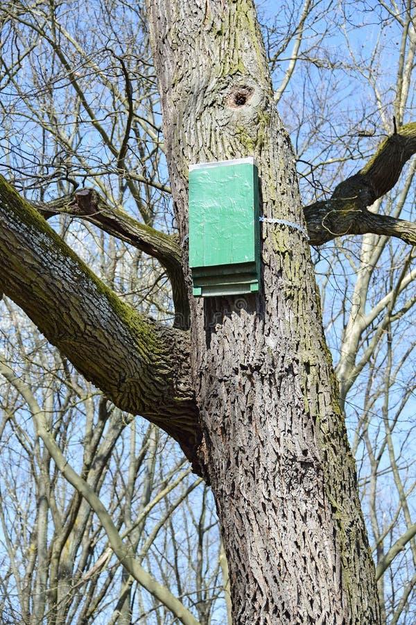 Bat hutch on a tree trunk stock image