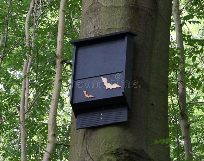 Bat nest box royalty free stock images