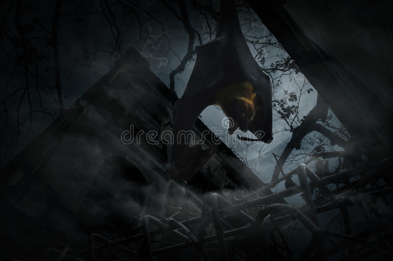 Bat scream and hang over fence, old grunge castle, moon and cloudy sky, Mysterious background, Halloween concept stock photos