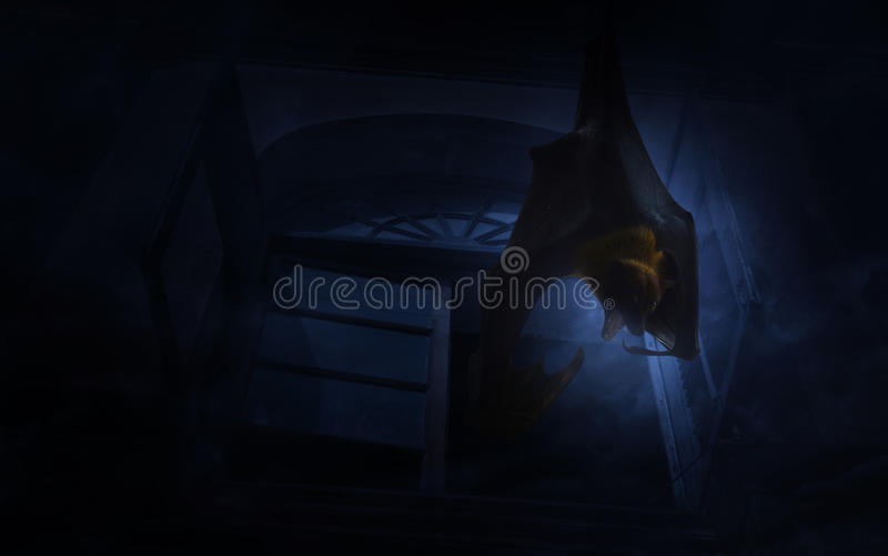 Bat scream and hang over old ancient window castle, Spooky background, Halloween concept royalty free stock photos