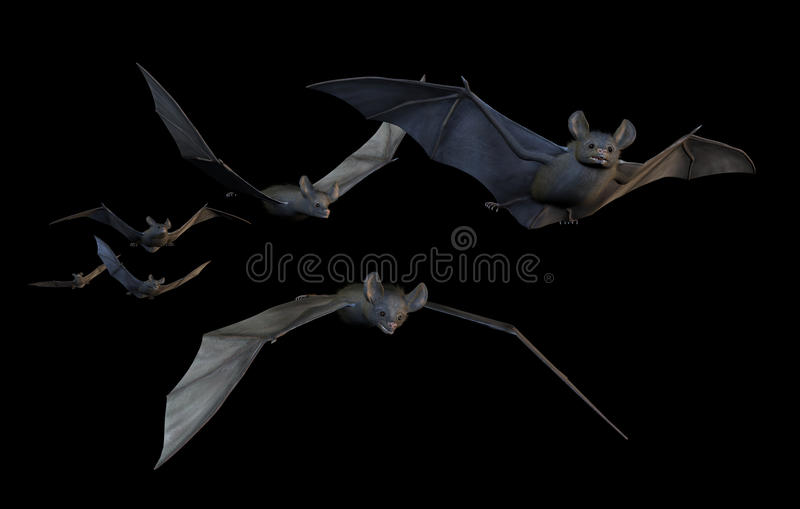 'bat' volant - sur le blanc illustration stock