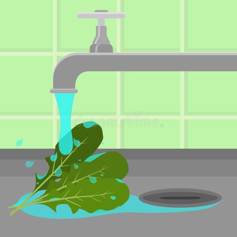 Bata a rúcula de lavagem ilustração stock