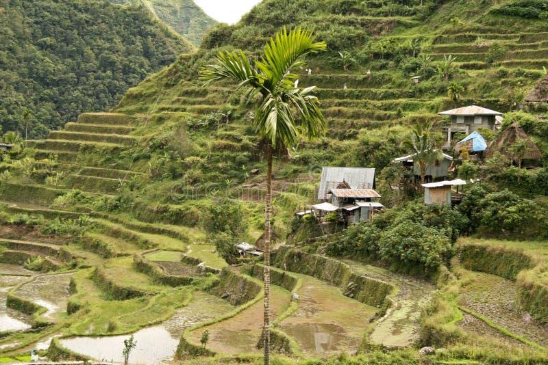 batad ifugao菲律宾米大阳台 库存照片