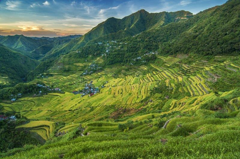 Batad-Reis-Terrassen stockbilder