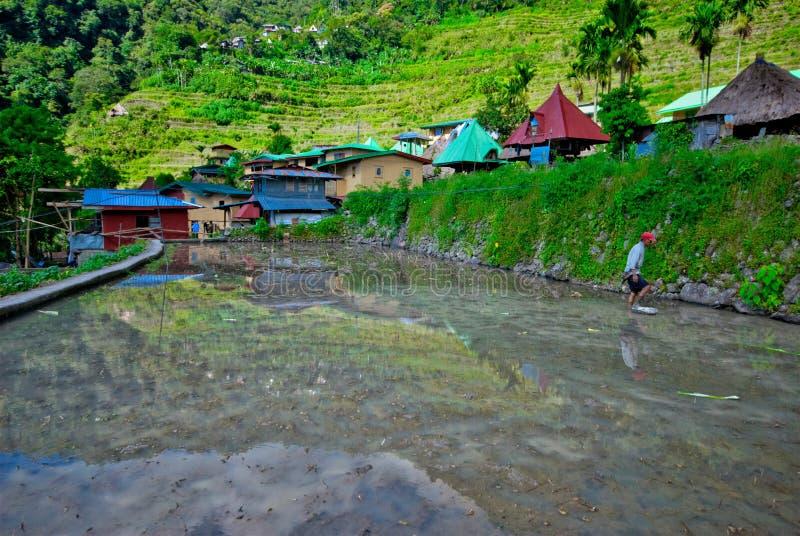 Batad risterrasser, Banaue, Ifugao, Filippinerna fotografering för bildbyråer