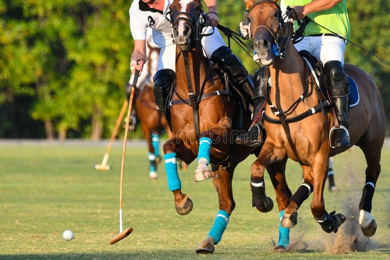 Bataille de polo de cheval photographie stock
