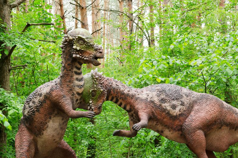Bataille modèle de deux dinosaures Pachycephalosaurus photo libre de droits