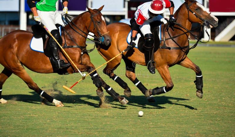 Batalha dos jogadores do cavalo do polo no jogo imagem de stock