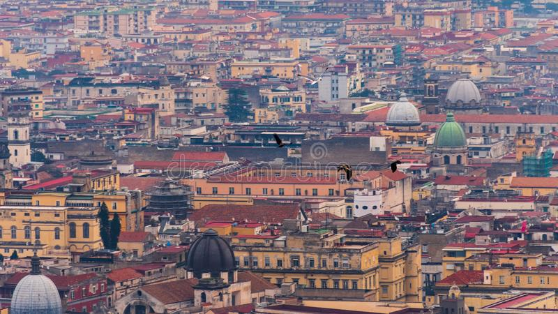 Batalha entre uma gaivota um corvo e dois falcões nos céus de Nápoles imagem de stock royalty free