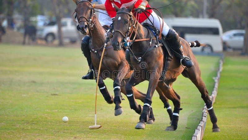 Batalla de Polo Player del caballo fotografía de archivo