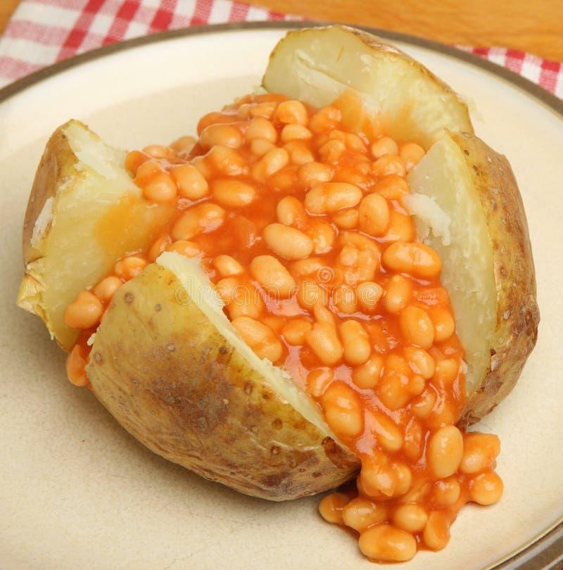 Batata com manteiga com feijões cozidos foto de stock royalty free
